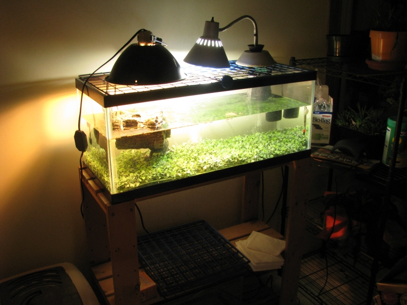 Turtle tank freshly cleaned, lined with plastic clover, gear cleaned ...